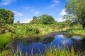picture of grassland  - Pond and Grassland at Arne in the Dorset Countryside - JPG
