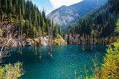 stock photo of shan  - Kaindy Lake in Tien Shan mountain Kazakhstan - JPG