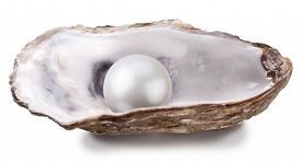 image of pearl-oyster  - Open oyster with pearl isolated on white background - JPG