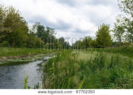 Small river with green grass