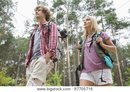 Low angle view of hiking couple looking away in forest