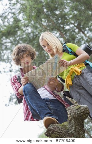 Low angle view of hiking couple reading map together in forest