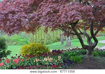 Colorful Spring Tulips And Trees