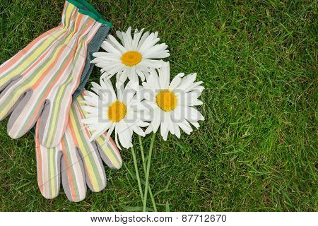 Garden gloves and chamomile flowers over green grass with copy space