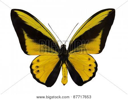 macro photo of yellow butterfly isolated on white background