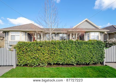 Green fence hedge from evergreen plants with two houses in the background. Landscape trimming design