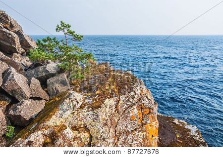 Lone Pine Tree On A Cliff By The Sea.