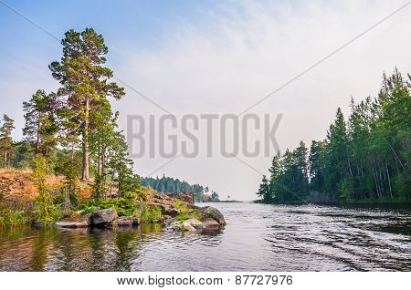 Pines On The Coast Of Lake.