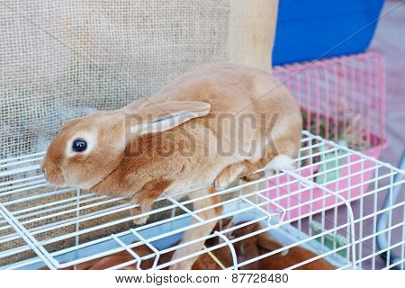 Small Red Hand Rabbit Sits On White Cell In Store Of Animals