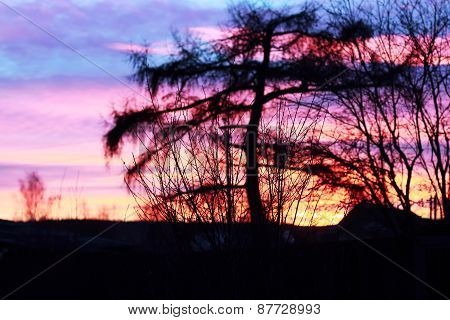 Black Silhouettes Of Trees Against Backdrop Of Beautiful Purple Sunset
