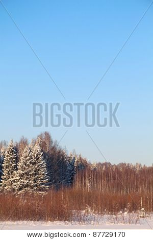 Forest With Trees In White Snow And Blue Sky At Sunny Winter Day