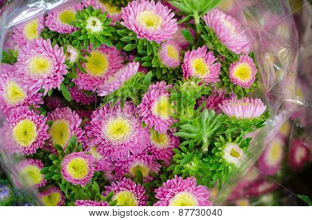 Aster Flower In Plastic Bag