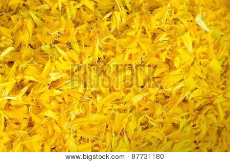 The Yellow Flower Marigold Multi Petal Background