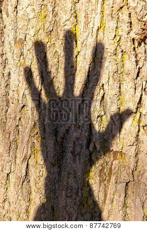 Hand Shadow On Tree