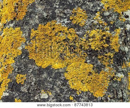Tree Fungi Texture