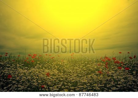 Landscape With Poppies And Chamomile In Sunset Light 7