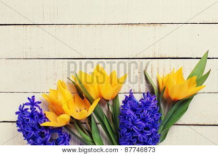 Background With Fresh Tulips And Hyacinths