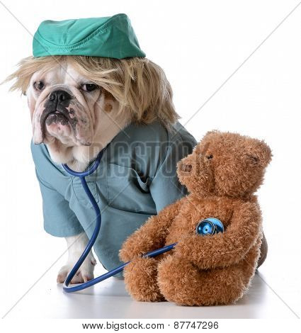 veterinary care - bulldog dressed like a doctor listening to the heart of a stuffed teddy bear