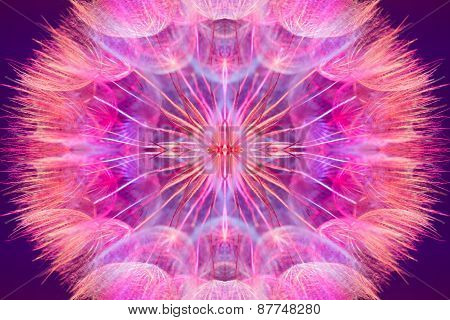 Colorful Pink Pastel Background - Vivid Abstract Dandelion Flower