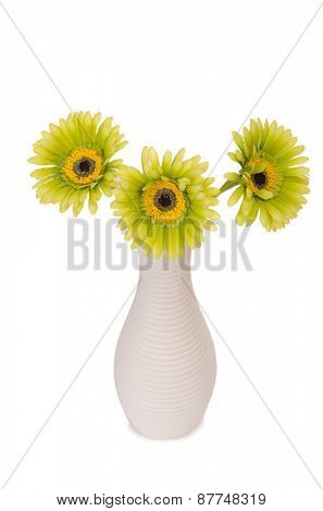 Gerbera flowers isolated on the white background