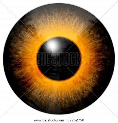 Brown Orange Eye
