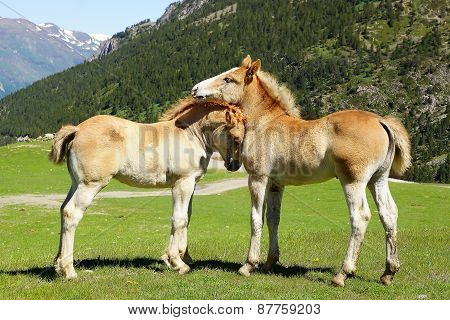 Picturesque nature landscape with foals.