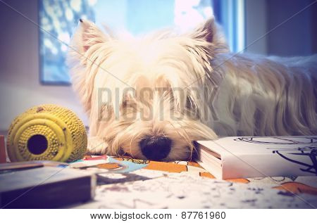 Dog sleeps on table