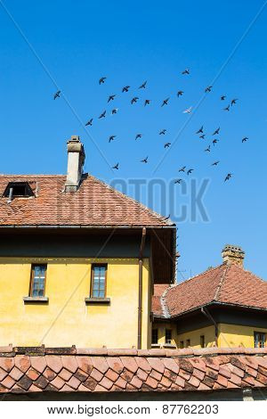 flock of pigeons flying over the roof