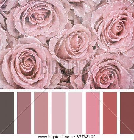 A bouquet of pink roses, textured and filtered to look like an aged photograph, in a colour palette with complimentary colour swatches.