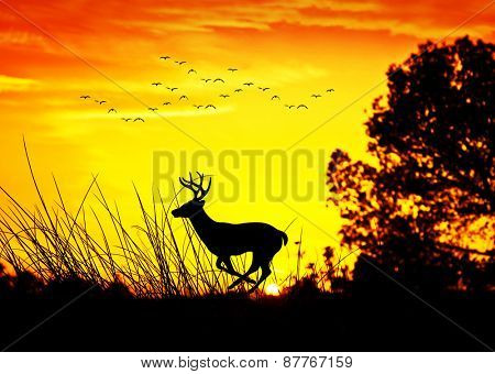 animals y nature