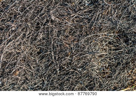 all that was left after the burnt grass texture background