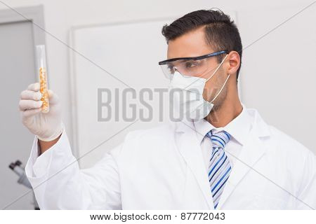 Scientist holding test tube of corn in the laboratory
