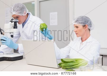 Scientists examining green pepper in laboratory