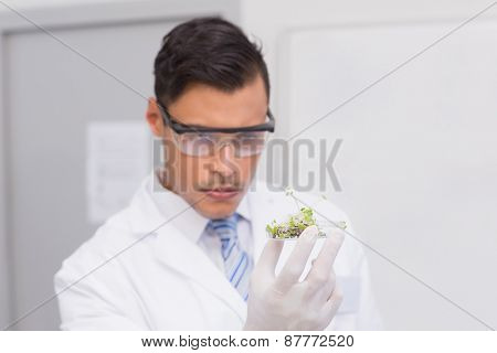 Scientist holding a petri dish with tests of plants in laboratory