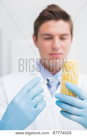 Biologist examining corn with syringe in laboratory