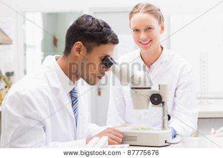 Scientists observing petri dish with microscope in laboratory