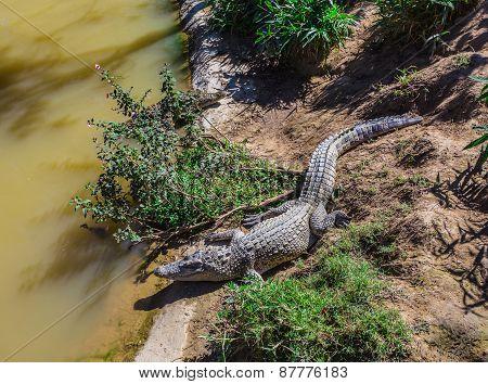 Water Bodies On The Crocodile Farm In Dalat.