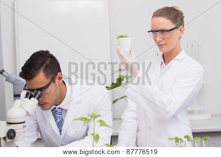 Scientists examining plants in the laboratory
