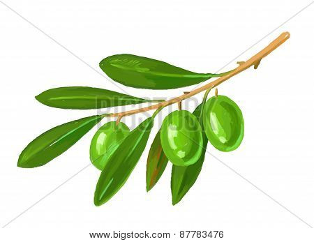 picture of olive tree branch