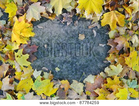 Autumn leaves on pavement in a shape of frame