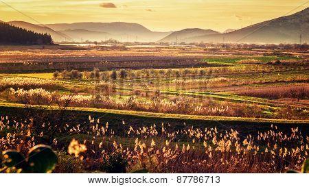 Sunset Illuminates The Fertile Fields And Lot Of Vegetation