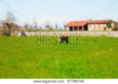 Field With Horse