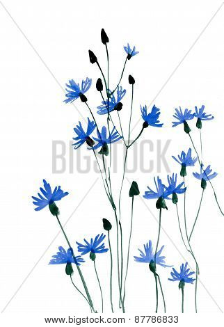 Many Blue Flowers On White Background