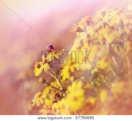Bee collects pollen and nectar