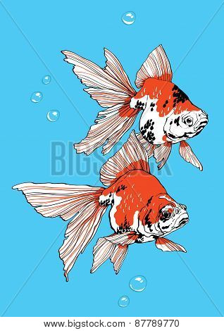 Two Golden Fish On Blue Background Vector
