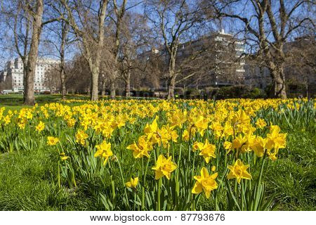 Springtime View Of Green Park In London
