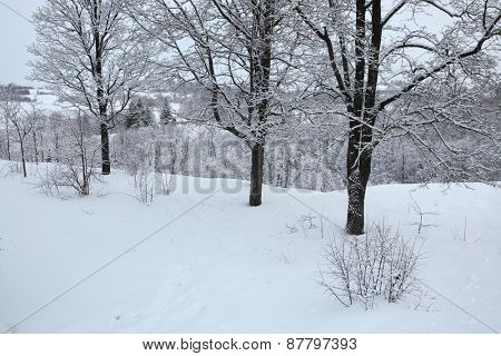 Russian winter. Snow-covered forest near the Izborsk Fortress near Pskov, Russia.