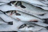 stock photo of saltwater fish  - Fresh saltwater fish on crushed ice in a marine restaurant of Montenegro - JPG