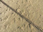 stock photo of motocross  - Motocross bike trace in a muddy surface - JPG