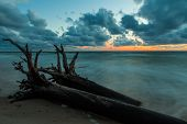 foto of fallen  - Beautiful colorful Baltic seascape with pine stump with roots that was fallen while storm laying in foreground - JPG